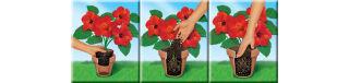 COMPO SANA Terreau de rempotage de qualité pour fleurs, 20 l