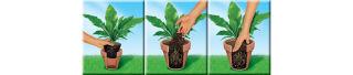 COMPO SANA Terreau plantes vertes et palmiers, 10 litres