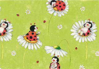 SUSY CARD Papier cadeau 'Coccinelle', sur rouleau